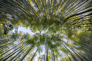 bamboo-1886974_1920.jpg