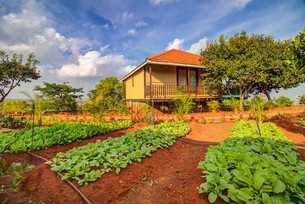 Organic Farmming