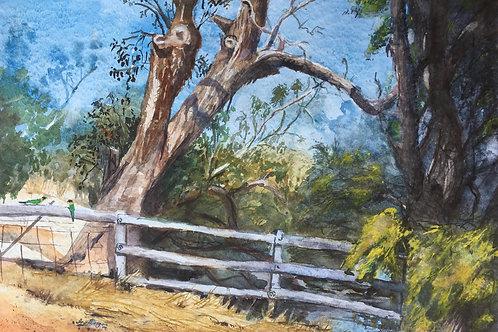 Blackwood River - Artist: Ira Morgan