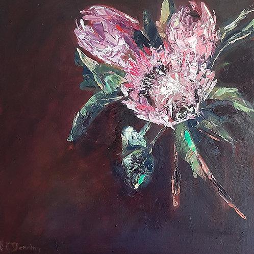 King Proteas - Artist: Cynthia Denning