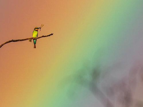 Rainbows All Around - Artist: Dick Jenkin
