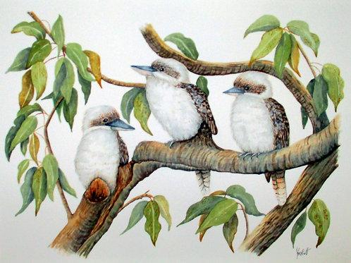 Kookaburras - Artist: June Beckett