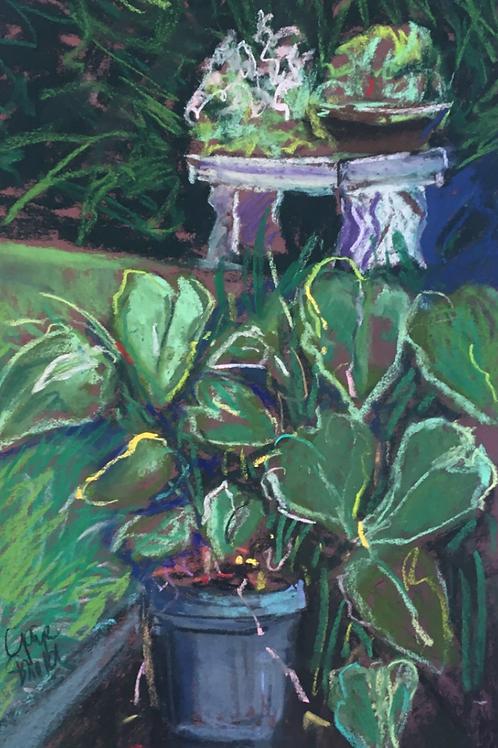Dungog Garden 3 - Artist: Gaye Shield