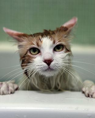 nasse Katze