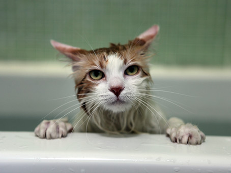 The Best Shampoos And Tips on How To Bath Your Cat