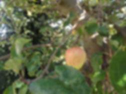 Garten_001.jpg