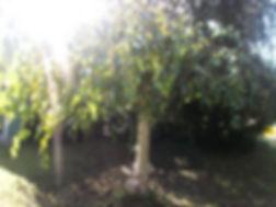Garten_002.jpg