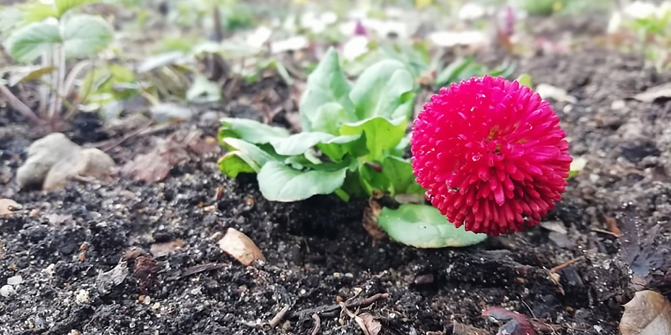 Zone 4: 'Grow big or go home' spring planting with TCV at St Nicholas