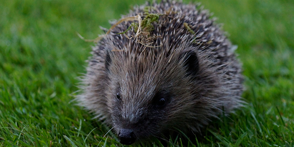 Zone 5: Helping hedgehogs litter pick at Lousehill Copse