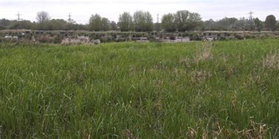 Zone 3: Explore Coley marshes