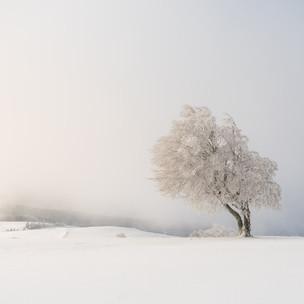 #44 | Windbuchen update Winter 2019/2020