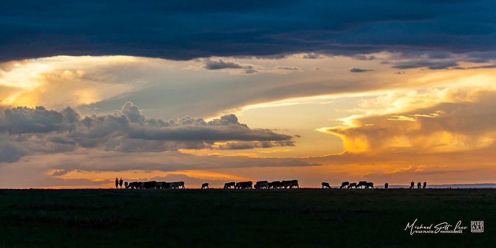 Masai herdsmen and cattle silhouetted by storm clouds at sunset in Amboseli National Park, Kenya, Africa, Michael Scott Lees