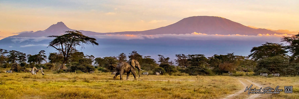 Bull elephant on dust in front of Mt Kilimanjaro in Kimana Sanctuary, Kenya, Michael Scott Lees fine art photographic prints