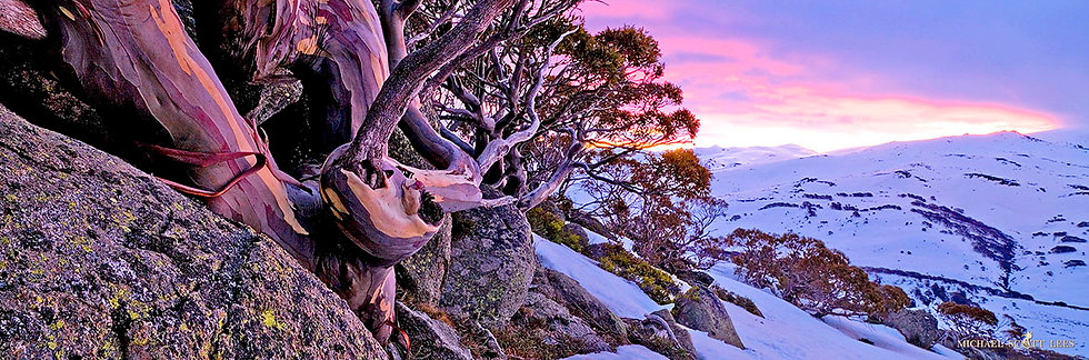 Snowgums and ranges in snow, Kosciuszko National Park, Australia. Fine Art Photography Prints for Sale by Michael Scott Lees