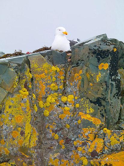 Cape Gull, South Shetland Islands, Antarctica. Fine Art Photography Prints for Sale by Michael Scott Lees photographer.