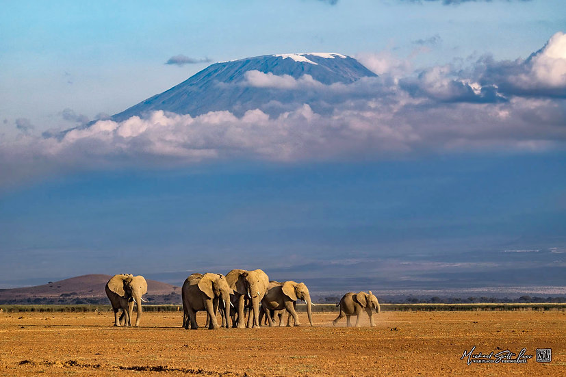 Elephants crossing a dead lake and Kilimanjaro in the background in Amboseli National Park, Kenya, Africa, Michael Scott Lees