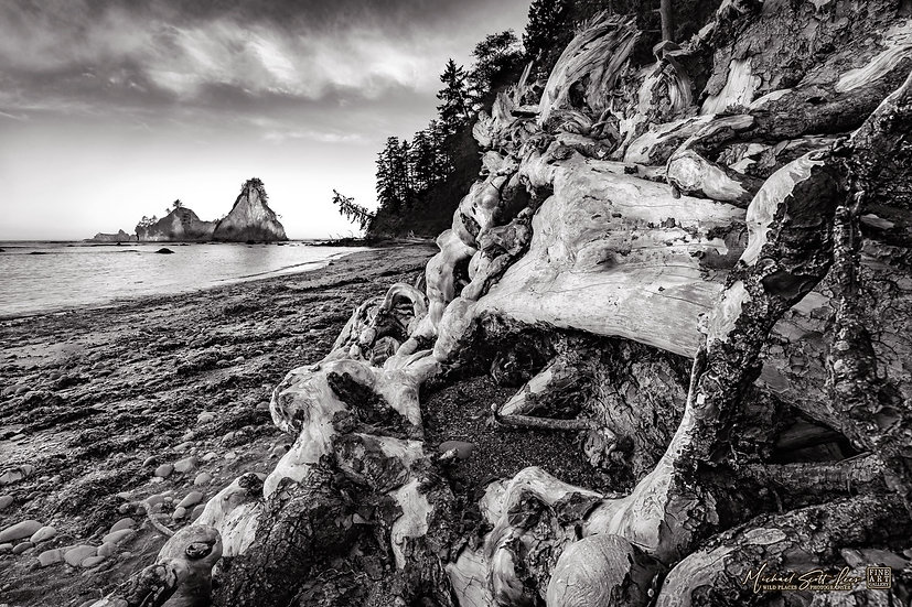 Driftwood near Rialto Beach in Olympic Coast National Park, Washington State, America. Michael Scott Lees fine art photograph