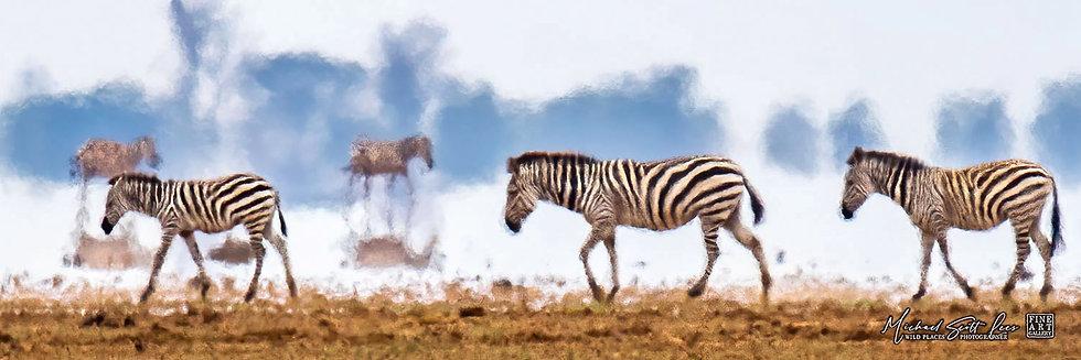 Zebras in a heat wave crossing a dead lake in Amboseli National Park, Michael Scott Lees fine art photographic prints