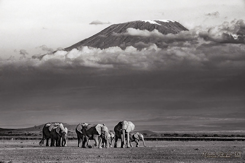 Elephants crossing a dead lake with Kilimanjaro in the background, Amboseli National Park, Kenya, Africa, Michael Scott Lee