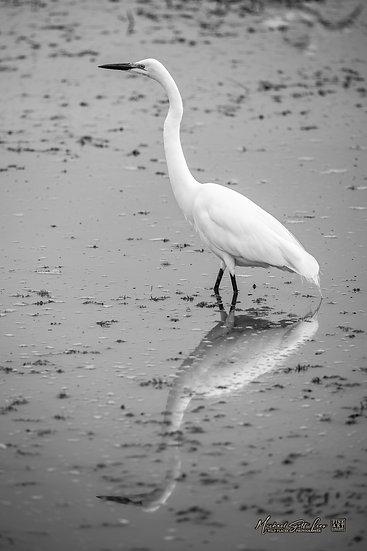 White Heron in Amboseli National Park, Michael Scott Lees fine art photographic prints for sale