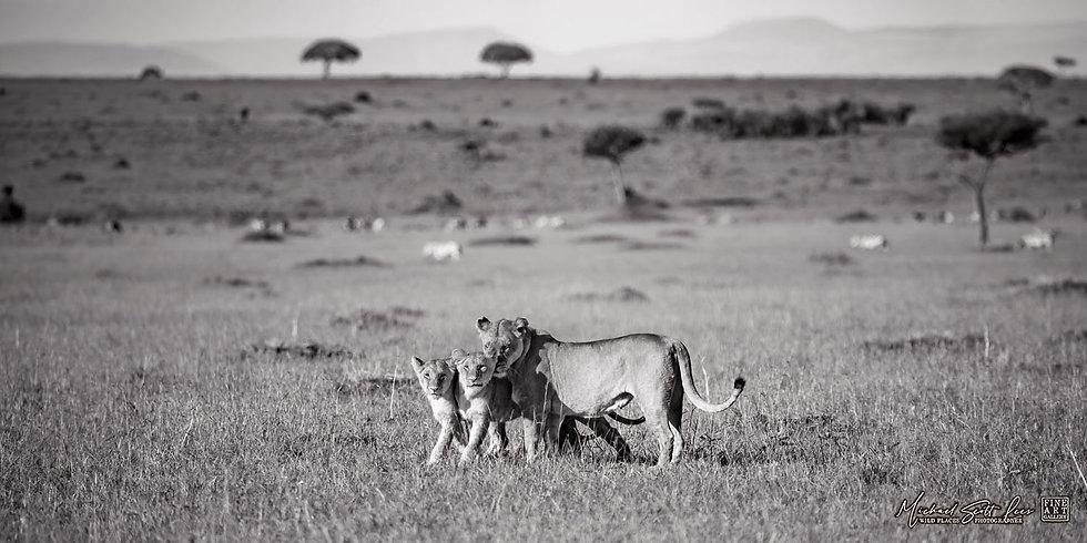 Masai Mara National Reserve, Kenya – Code: AN563P2T