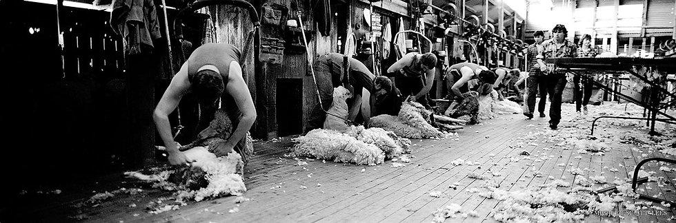 Shearing the sheep at Gunbar Station, Hillston, Australia. Fine Art Photography Prints for Sale by Michael Scott Lees photo