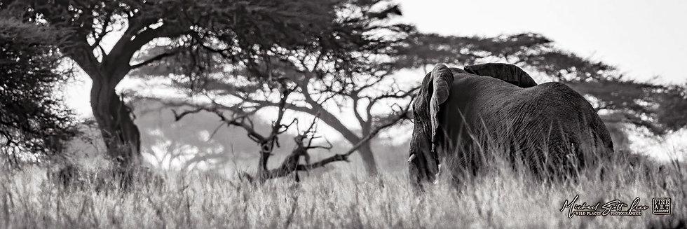 Elephant in long grass in Kimana Sanctuary, Kenya, Michael Scott Lees fine art photographic prints for sale