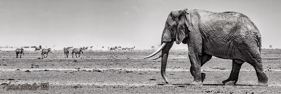 Elephant and Zebras on a dead lake in Amboseli National Park, Kenya, Africa, Michael Scott Lees fine art photographic prints
