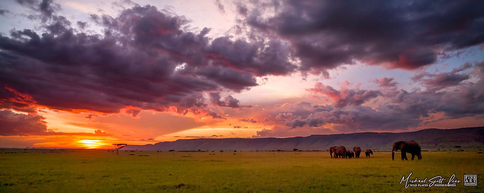 Elephants grazing at sunset in Mara Triangle, Michael Scott Lees fine art photographic prints for sale
