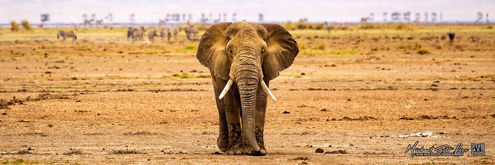 Elephant on a dead lake in Amboseli National Park, Michael Scott Lees fine art photographic prints for sale