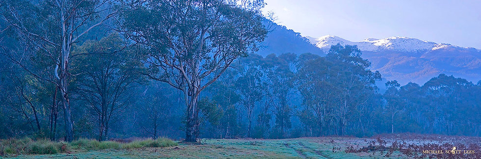 Eucalypt tree and the western slopes of Kosciuszko National Park, Australia. Fine Art Photography Prints for Sale by Michael