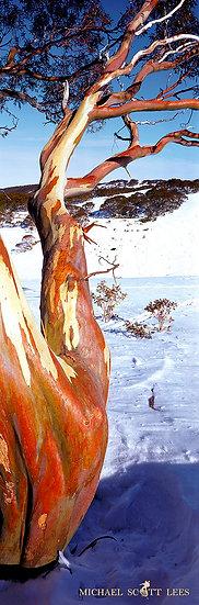 Cope Hut in Alpine National Park, Australia. Fine Art Photography Prints for Sale by Michael Scott Lees photographer.