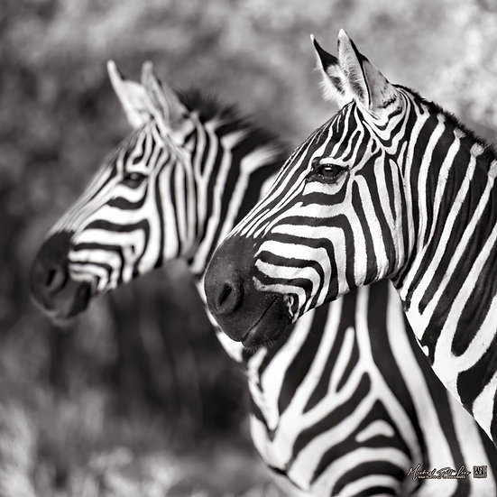 Two zebras at Tsavo West National Park, Kenya, Africa, Michael Scott Lees fine art photographic prints for sale