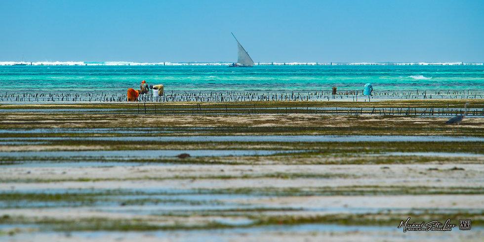 Zanzibar Island in Tanzania, Africa, Michael Scott Lees fine art photographic prints for sale