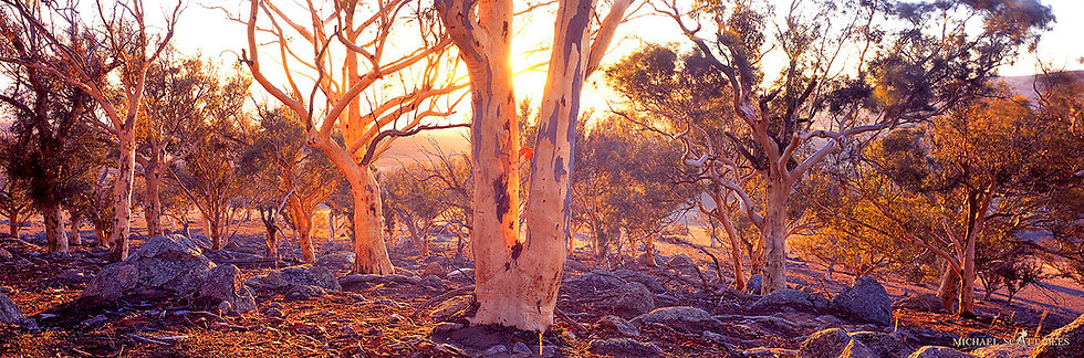 Trees and rock on a Hillside near Lake George, Australia. Fine Art Photography Prints for Sale by Michael Scott Lees photo