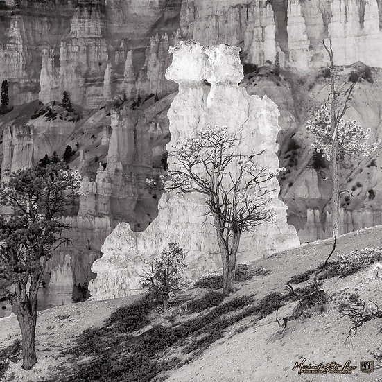Navajo Loop Trail at Bryce Canyon National Park, America. Michael Scott Lees fine art photographic prints for sale