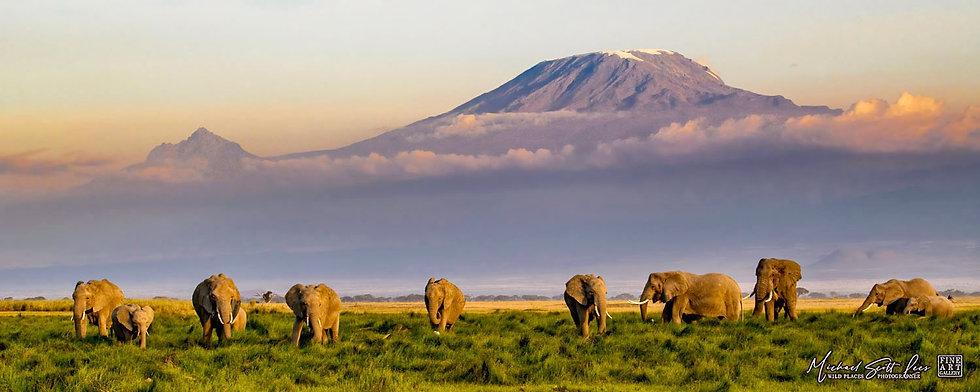 Elephants and Mt Kilimanjaro in Amboseli National Park, Michael Scott Lees fine art photographic prints for sale