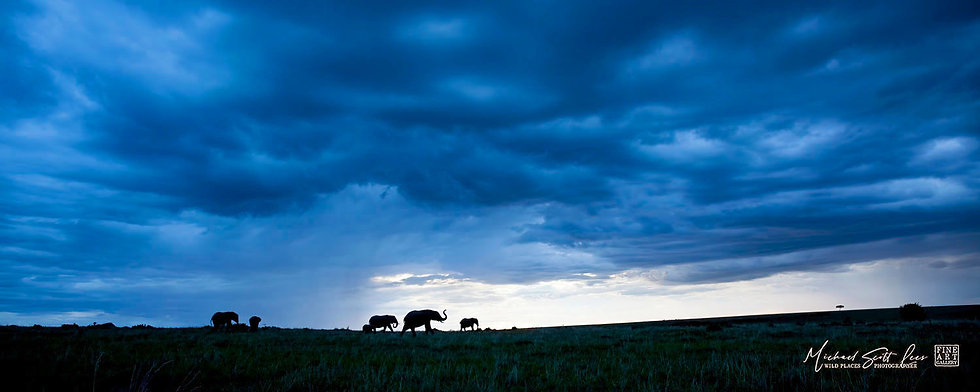 Elephants under a storm in Maasai Mara National Reserve, Kenya, Michael Scott Lees fine art photographic prints for sale