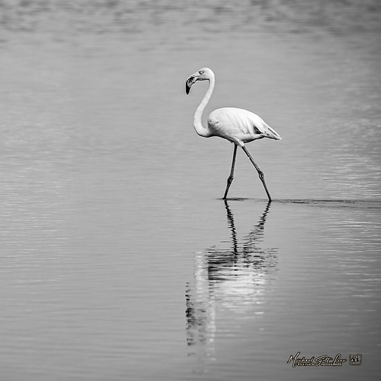 Flamingo in Amboseli National Park, Michael Scott Lees fine art photographic prints for sale