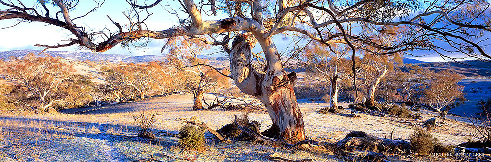 Old tree in the Snowy Mountains, Australia. Fine Art Photography Prints for Sale by Michael Scott Lees photographer.
