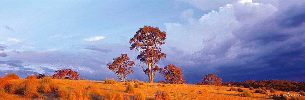 Tree in a paddock, Cowen Forest, Australia. Fine Art Photography Prints for Sale by Michael Scott Lees photographer.