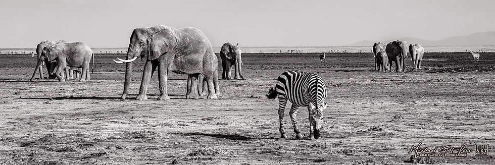 Zebras and elephants on a dead lake in Amboseli National Park, Michael Scott Lees fine art photographic prints for sale