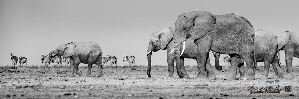 Elephants in Amboseli National Park, Michael Scott Lees fine art photographic prints for sale