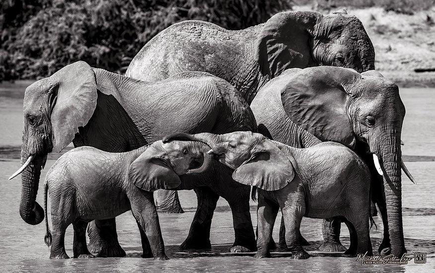 Elephants in the river at Samburu National Park, Kenya, Michael Scott Lees fine art photographic prints for sale