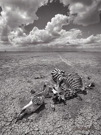 Zebra carcass on a dead lake in Amboseli National Park, Michael Scott Lees fine art photographic prints for sale