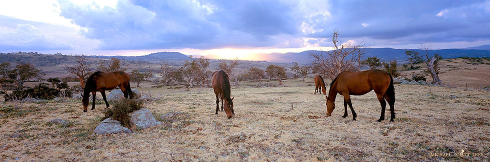 Horses in the Snowy Mountains region in Australia. Fine Art Photography Prints for Sale by Michael Scott Lees photographer.