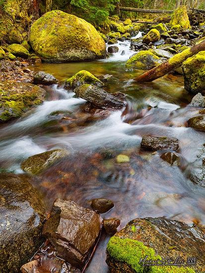 Skate Creek in Gifford Pinchot National Forest, Washington State, America. Michael Scott Lees fine art photographic prints