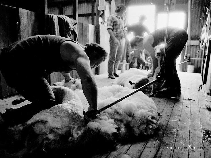 Shearing near Stockinbingal NSW, Australia. Fine Art Photography Prints for Sale by Michael Scott Lees photographer.