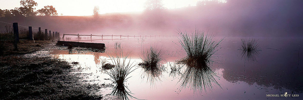 Tussock in a flooded paddock at Wollombi, Australia. Fine Art Photography Prints for Sale by Michael Scott Lees photographer.