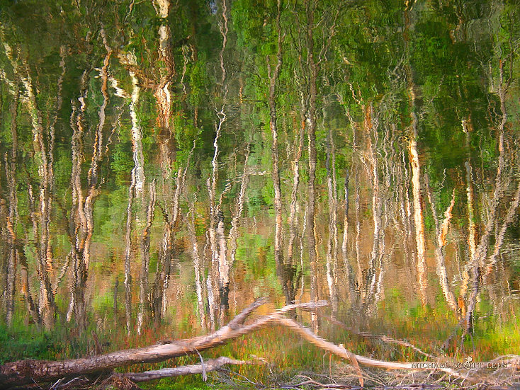Reflections of trees in the river, Snowy Mountains, Australia. Fine Art Photography Prints for Sale by Michael Scott Lees pho